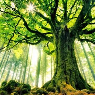 Pogovor o koreninah Slovencev